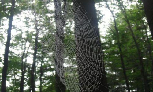 Zdjecie NORWEGIA / brak / hamar / spider's web