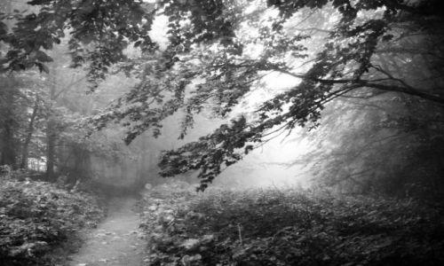 Zdjecie NORWEGIA / brak / las w pobliżu miejscowości hamar / o poranku