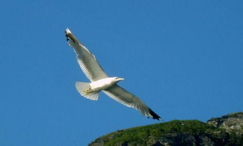 Zdjęcie NORWEGIA / Geirangerfjord / brak / Mewy1