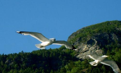 Zdjęcie NORWEGIA / Geirangerfjord / brak / Mewy2