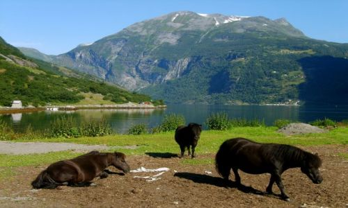 Zdjęcie NORWEGIA / nad Geirangerfjord / Geirenger / Koniki