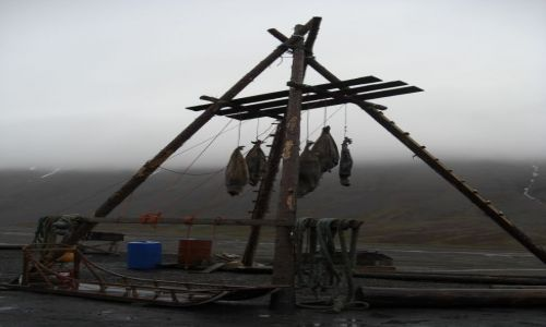 Zdjecie NORWEGIA / Svalbard / Longyearbyen / Pułapka na nied