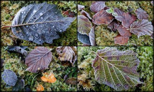 Zdjecie NORWEGIA / brak / Asenfjord / jesień