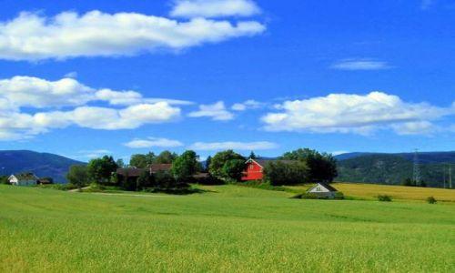Zdjecie NORWEGIA / Skien / w drodze na działke / Typowy widok w Norwegi
