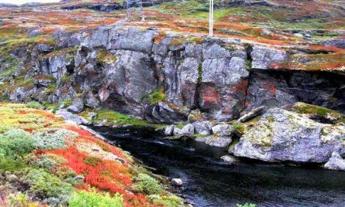 Zdjecie NORWEGIA / Okolice Sognefiordu / okolice Laerdal / Sognefiord
