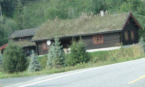 Zdjecie NORWEGIA / Buskerud / okolice Veggli / Środkowa Norweg