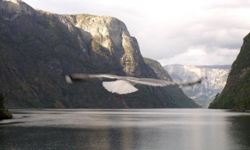 Zdjęcie NORWEGIA / - / Geirangerfjord / Rejs statkiem wzdłóż fiordu.