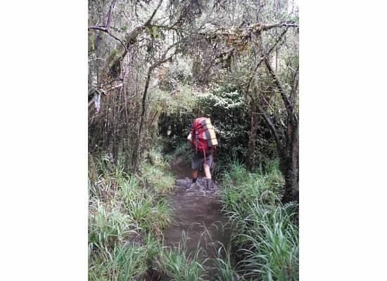 Zdjęcia: szlak, wyspa południowa, błoto, NOWA ZELANDIA