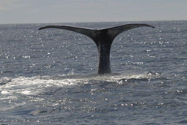 Zdjęcia: wyspa polodniowa, wieloryb, NOWA ZELANDIA