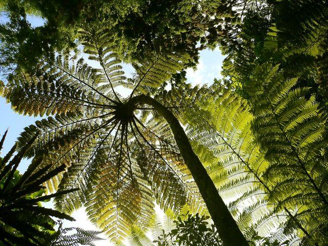 Zdjęcia: Nelson, Wyspa Poludniowa, Drzewo paproci, NOWA ZELANDIA