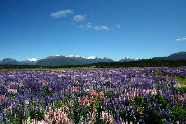 Zdjęcia: Milford Sound, W drodze do Milford Sound, NOWA ZELANDIA
