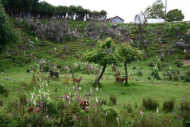 Zdjęcia: Manapouri, Farma jeleni, NOWA ZELANDIA