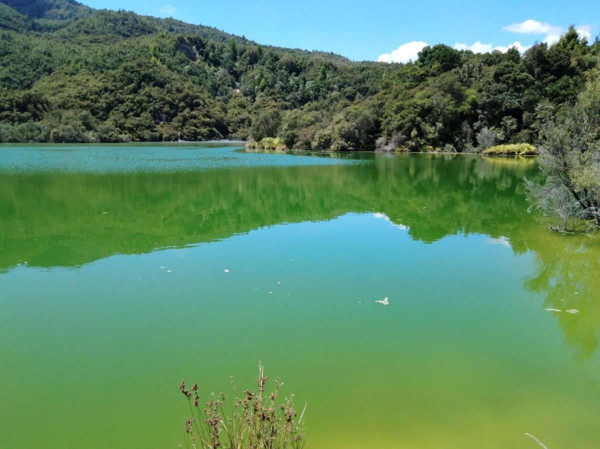 Zdjęcia: Rotowhero Lake, Rotorua, Zielone jezioro, NOWA ZELANDIA