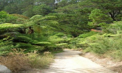 NOWA ZELANDIA / Pn. wyspa / Coromandel peninsula.. / Droga do skalnej katedry..