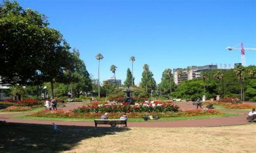 Zdjęcie NOWA ZELANDIA / Pn. wyspa / Auckland / Park Alberta