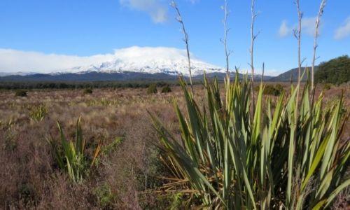 NOWA ZELANDIA / Wyspa Północna / Park Narodowy Tongariro / Przedwiośnie
