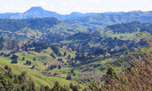 NOWA ZELANDIA / Wyspa Północna / okolice Rotorua / pastwiska