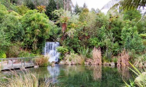 NOWA ZELANDIA / Wyspa Północna / Rotorua / Rainbow Springs