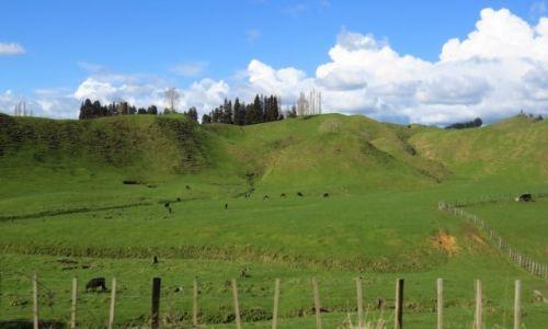 NOWA ZELANDIA / Wyspa Północna / okolice Rotorua / typowy krajobraz
