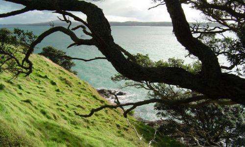 Zdjecie NOWA ZELANDIA / brak / Waiheke Island / Waiheke Island