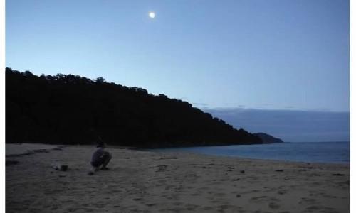 Zdjecie NOWA ZELANDIA / wyspa południowa / szlak / Abel Tasman