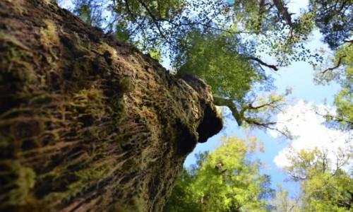 Zdjecie NOWA ZELANDIA / Milford Sound / w lesie / drzewo