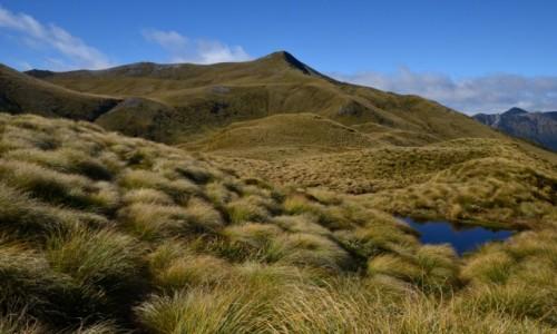 NOWA ZELANDIA / Fiordland / Borland Road / Fiordland