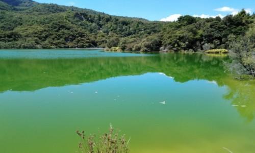 Zdjecie NOWA ZELANDIA / Rotorua / Rotowhero Lake / Zielone jezioro