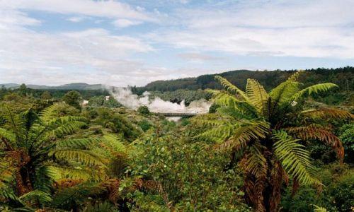 Zdjęcie NOWA ZELANDIA / Rotorua / rezerwat / Gejzery