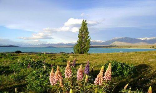 Zdjecie NOWA ZELANDIA / Wyspa Południowa / Lake Tekapo / wiosna nad Lake Tekapo