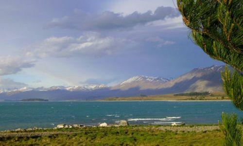 Zdjecie NOWA ZELANDIA / Południowa Wyspa / Lake Tekapo / nad turkusowym jeziorem Tekapo