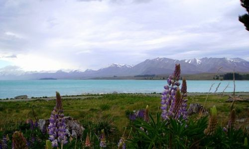 NOWA ZELANDIA / Południowa Wyspa / Lake Tekapo / inne kolory - Lake Tekapo