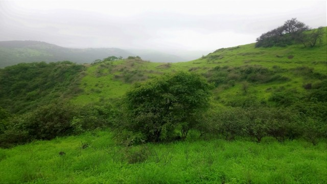 Zdjęcia: Werrsaar, Dhofar, A wokół pustynia, OMAN