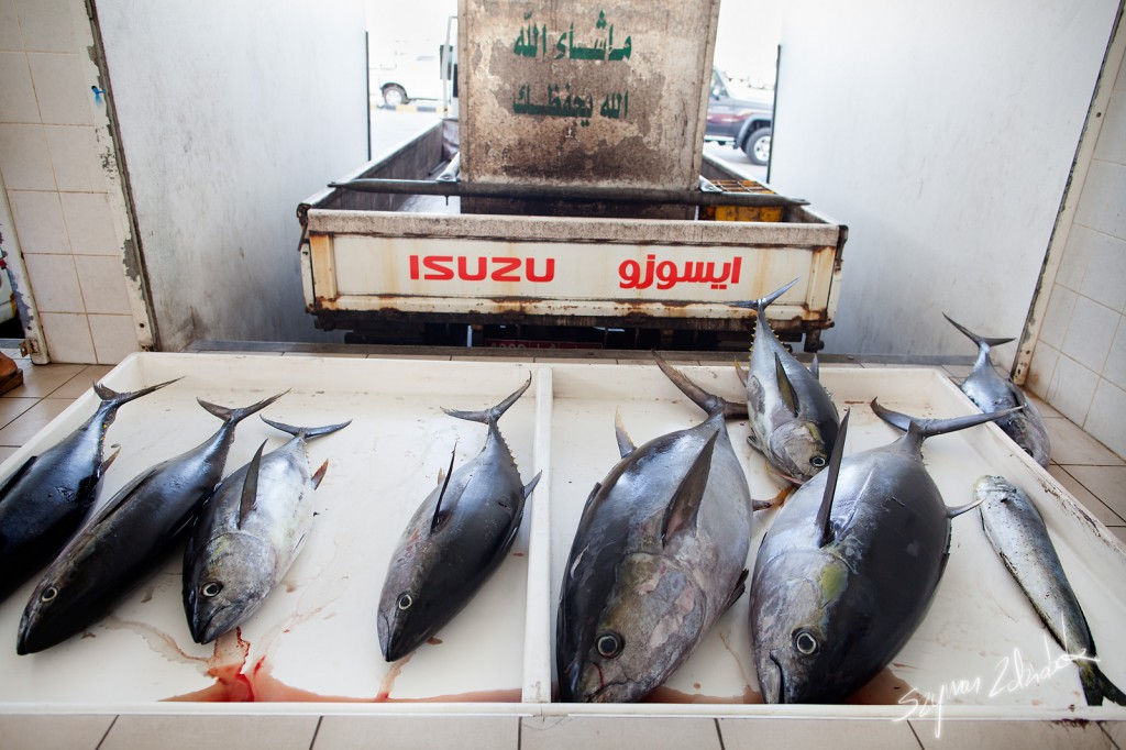 Zdjęcia: Sohar Fish Market, Sohar, A puszki takie małe..., OMAN