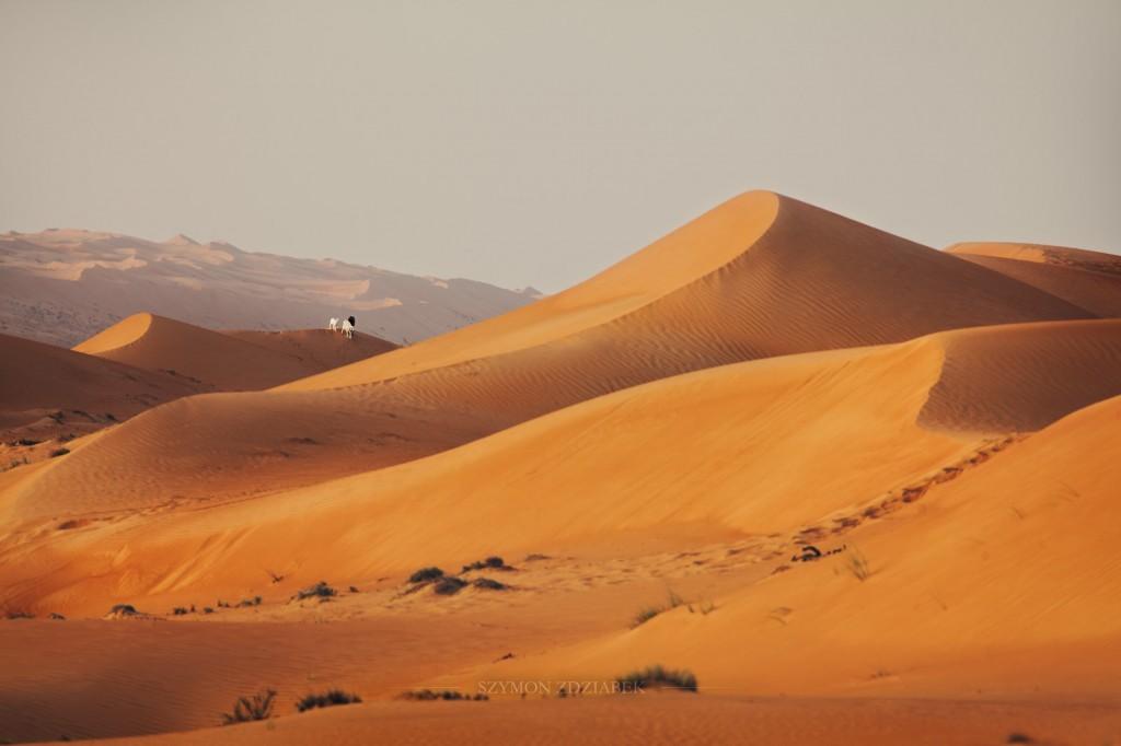 Zdjęcia: Wahiba Sands, Ash Sharqiyah Governorate, Spacer, OMAN
