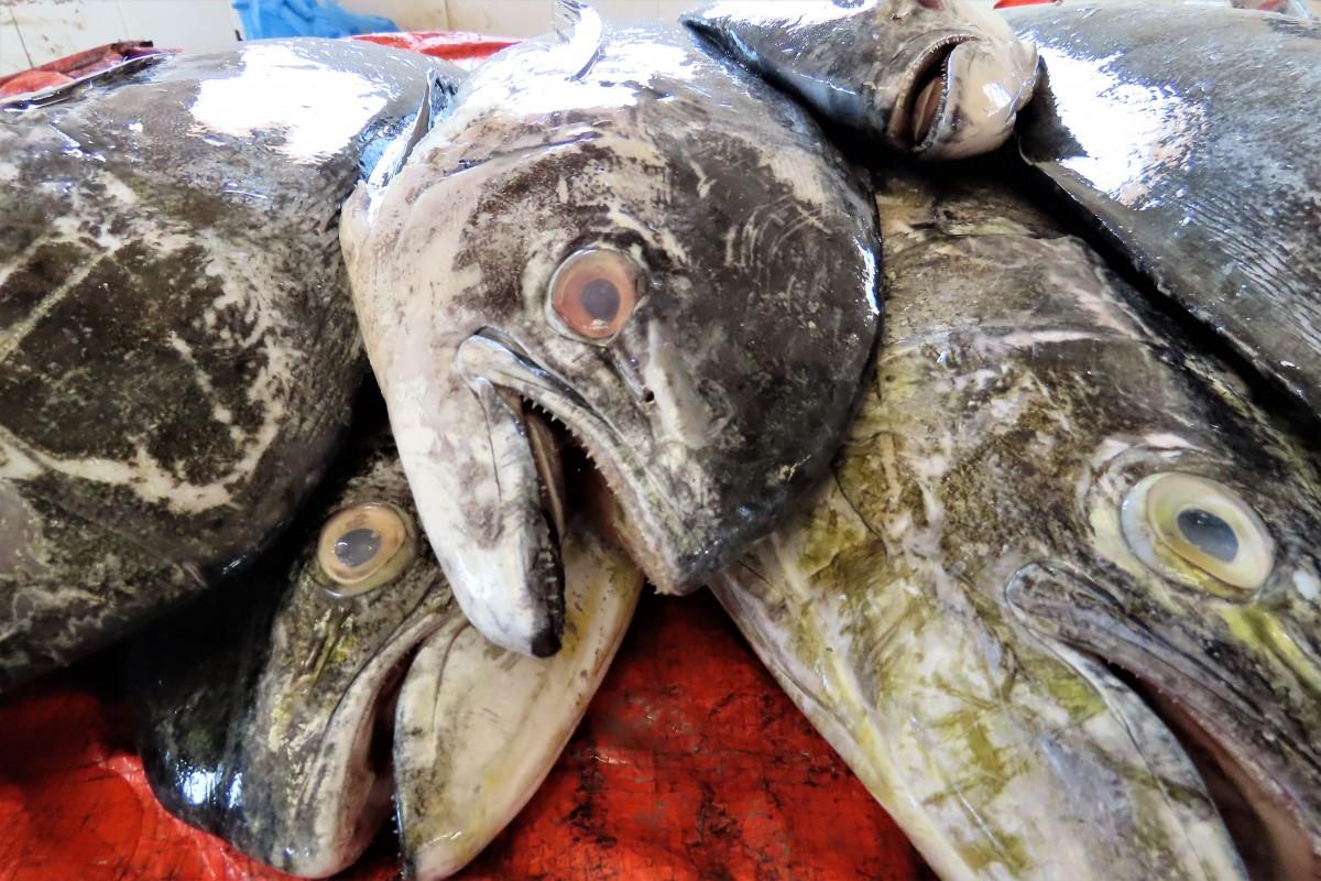 Zdjęcia: Sinaw, Targ rybny, OMAN