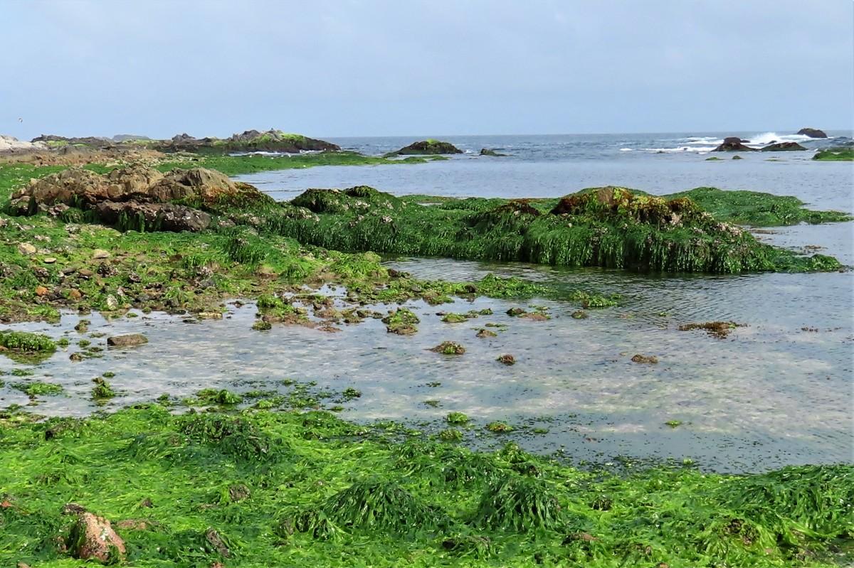 Zdjęcia: Dhofar, Wybrzeże Oceanu Indyjskiego, OMAN