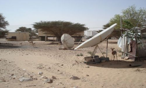 Zdjecie OMAN / Al Wusta / Jaaluni / Rezerwat oryksa arabskiego