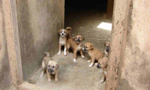 Zdjecie OMAN / Mirbat / Baszta w Mirbacie / Wszystkie psy Omanu
