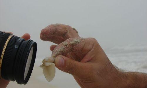 Zdjecie OMAN / Salala / Salala / Nieprzyzwoity ślimak morski