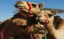 Zdjęcie ZJEDNOCZONE EMIRATY ARABSKIE / Al Ain / Na targu / Tulimy się