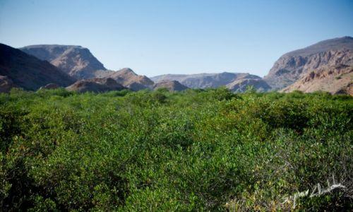 Zdjęcie OMAN / Bandar al Khiran / Bandar al Khiran / Las namorzynowy