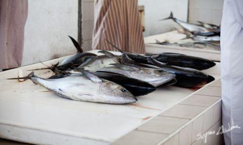 Zdjęcie OMAN / Sohar / Sohar Fish Market / Tuńczyki