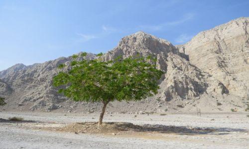 Zdjęcie OMAN / oman / oman / Krajobraz