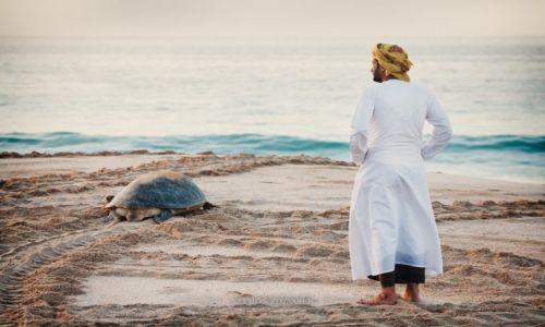 Zdjęcie OMAN / Ash Sharqiyah / Ras al Jinz / Żółw zielony