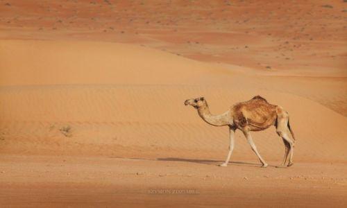 Zdjęcie OMAN / Ash Sharqiyah Governorate / Wahiba Sands / Dromader
