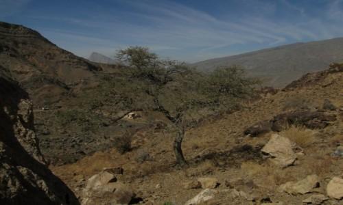 Zdjecie OMAN / Oman / Jabal Shams / Oman w listopadzie