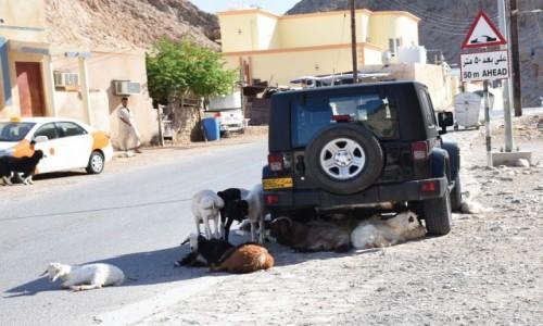 Zdjęcie OMAN / Muscat / W drodze na Yiti / Gorąco