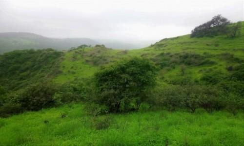 Zdjecie OMAN / Dhofar / Werrsaar / A wokół pustynia