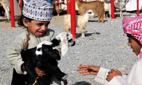 OMAN / - / Nizwa / Adept sztuki sprzedaży kóz